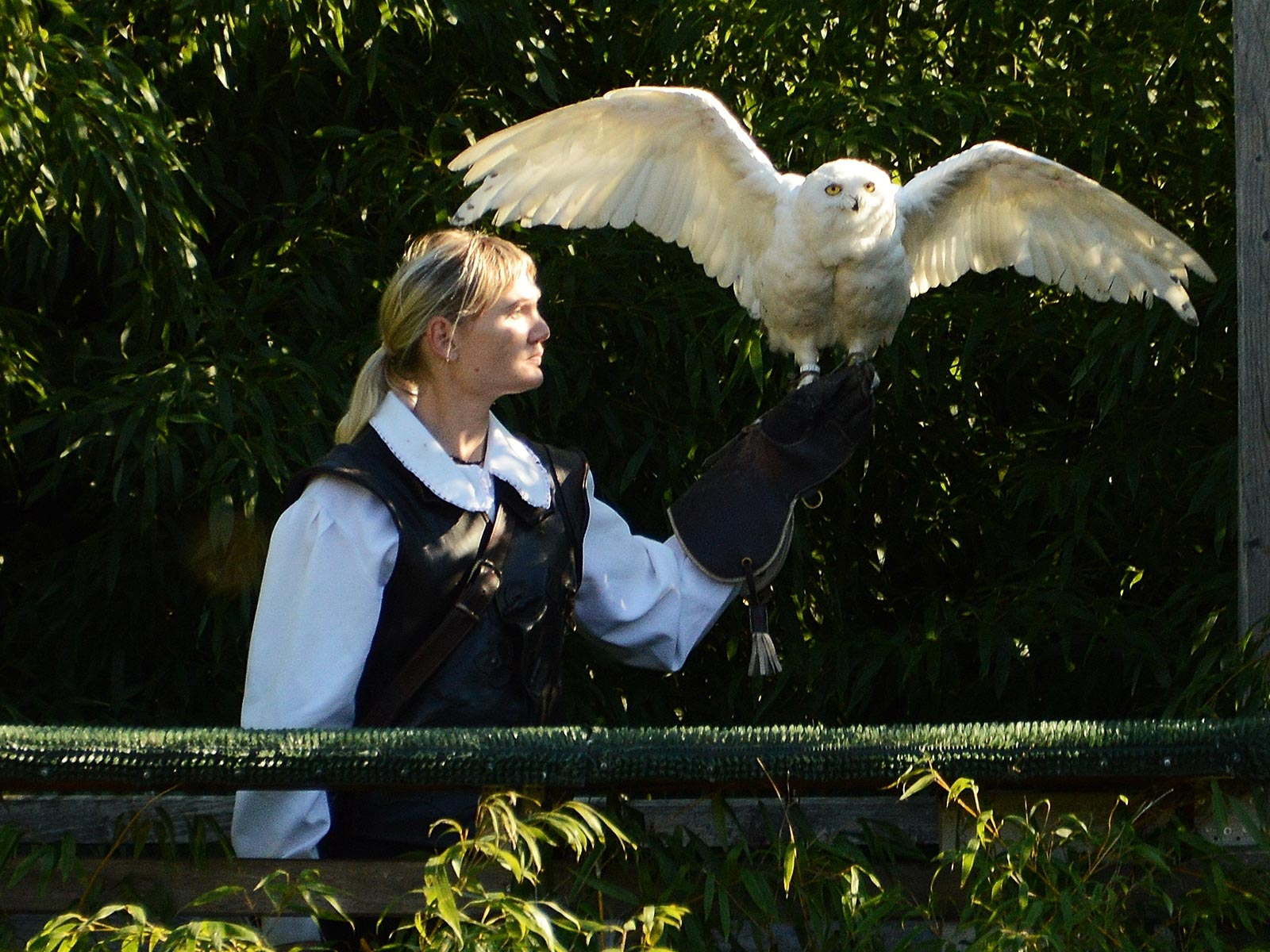 Park-Hotel-Brenscino-Brissago-hotel-Activity-Falconeria.jpg
